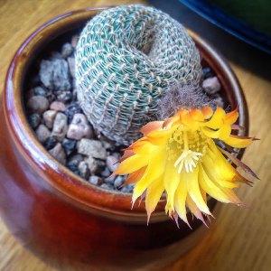 cactus (1 of 1)